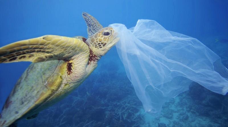 WWF: La lotta al Covid frena quella all'inquinamento da plastica