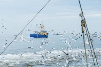 barche-certificate-msc-pescano-mazzancolla-oceanica-nel-mare-del-nord-_-credit-saskia-lelieveld-msc
