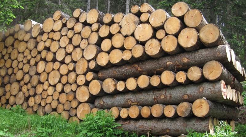 conlegno_legno-illegale