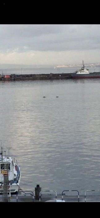 delfini-in-porto-castellammare