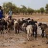 foto_2_azione-contro-la-fame