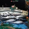 controlli-ittici-guardia-costiera-12