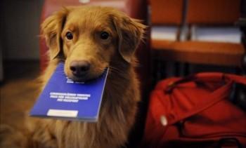 regolamento-per-animal